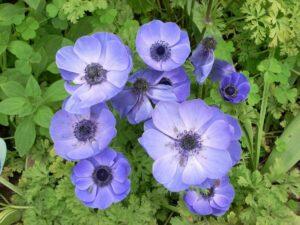 erleak-abejas-loreak-flores